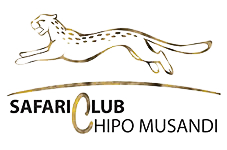 Safari-Club-Chipo-Musandi